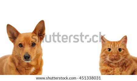 Dog and cat looking frot forword , Head shots - stock photo