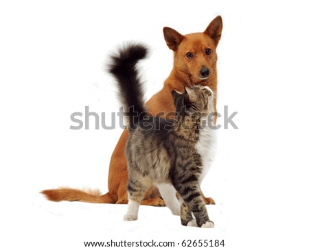 Dog and Cat looking on white background - stock photo