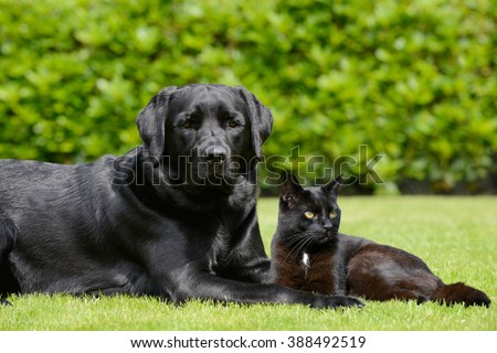 Dog and cat lying on meadow - stock photo