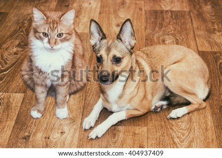 dog and cat lying on the floor - stock photo