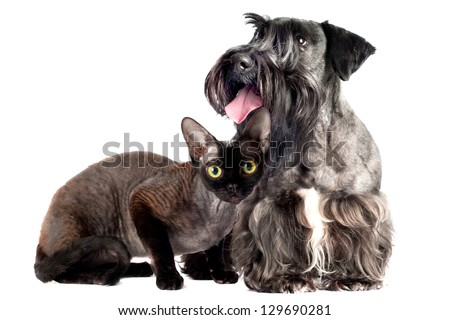 dog and cat on white