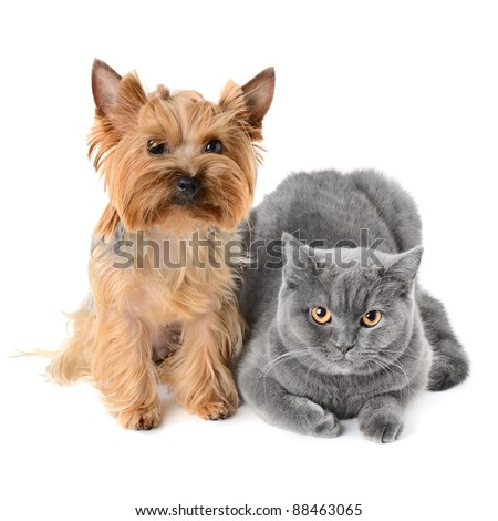 Dog and cat on white background - stock photo