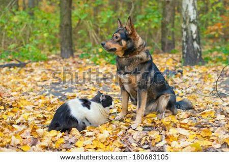 Dog and cat playing together outdoor in autumn - stock photo