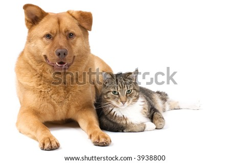 Dog and Cat posing for the camera (white background). - stock photo