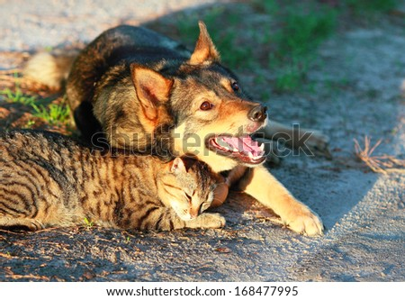Dog and cat relaxing together outdoor at sunset - stock photo