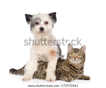 dog and cat together. isolated on white background