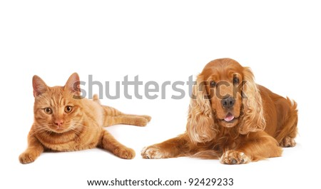 Dog and cat together, isolated on white background, lie down and looking at us