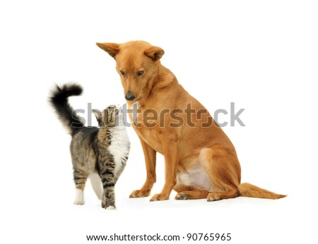 Dog and cat together isolated on white background. Looking one on another. - stock photo
