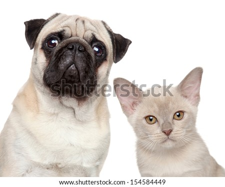 Dog and Cat together on a white background