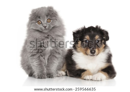 Dog and cat together on a white background - stock photo