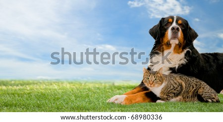 Dog and cat together on grass, sunny spring day and blue sky. Panorama - stock photo