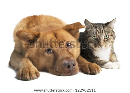 Dog and cat together on white background. Wide angle picture. - stock photo