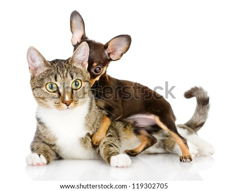 dog and cat together. the puppy whispers secrets on an ear of a cat. isolated on white background - stock photo