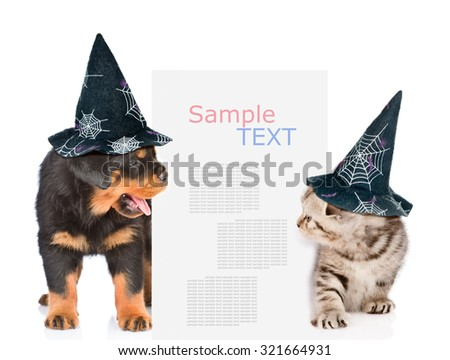Dog and cat with hats for halloween peeks out from behind the billboard and looking at text. isolated on white background - stock photo