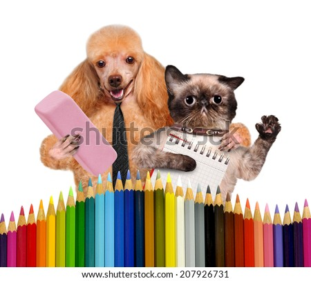 Dog and cat with school supplies - stock photo
