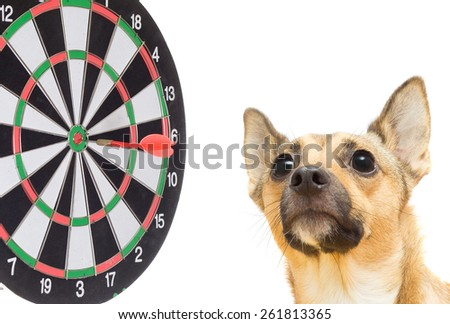 dog and darts on a white background isolated - stock photo