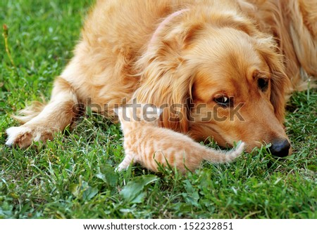 Dog and kitten, animal friendship - stock photo
