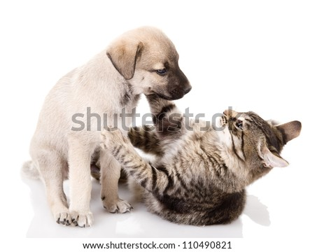 Dog And Kitten. isolated on white background - stock photo