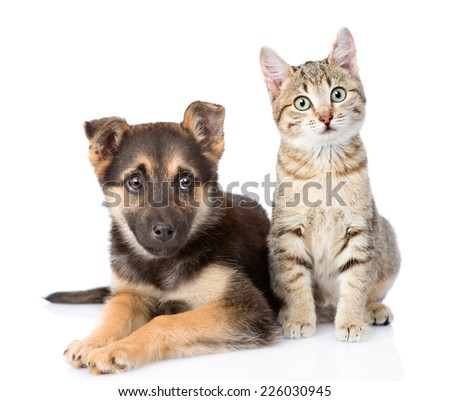 dog and  kitten. looking at camera. isolated on white background - stock photo