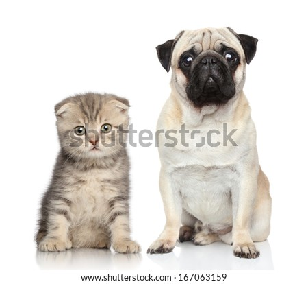 Dog and kitten. Potrait on white background