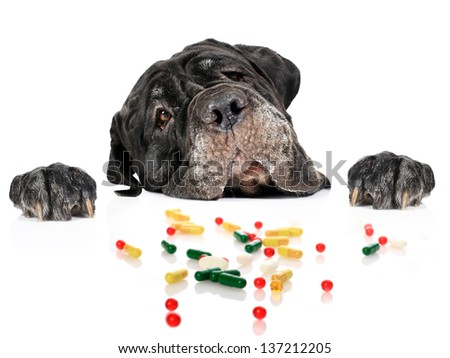 Dog and pills isolated over white. - stock photo