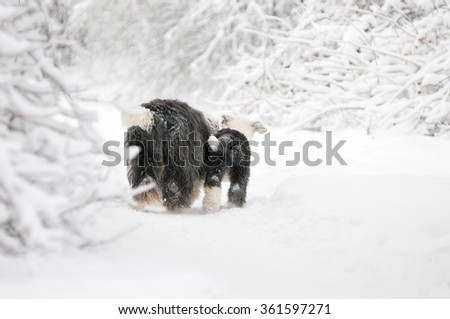 dog and puppy backs going away in snow forest - stock photo