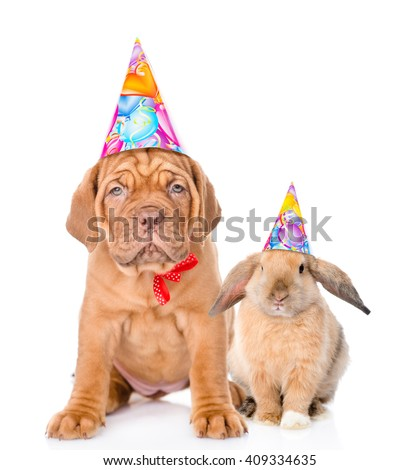 Dog and rabbit in  birthday hats sitting together. Isolated on white background
