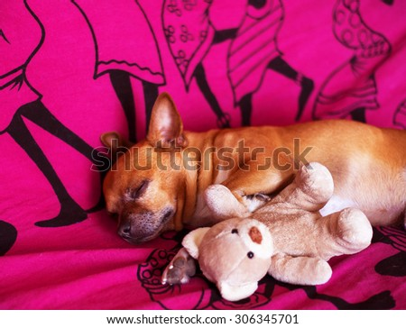 dog and toy on a violet blanket - stock photo