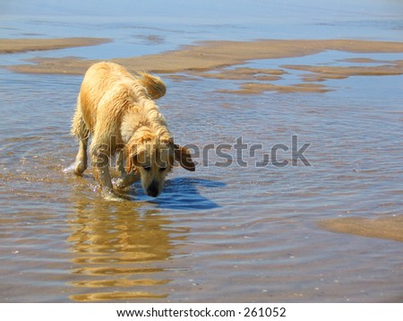 dog and water