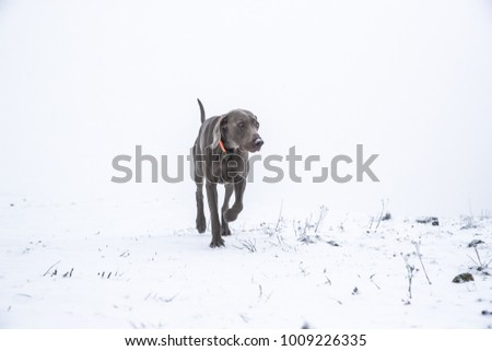 dog and winter time