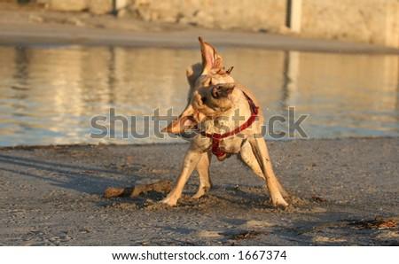 dog and wood stick - stock photo