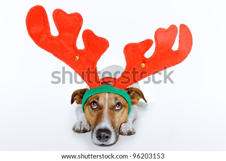 dog as deer