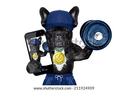 dog as  gym trainer with gold medal making peace and winner signs with fingers wearing gloves ,lifting a heavy dumbbell - stock photo
