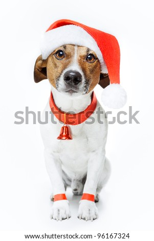 dog as santa - stock photo