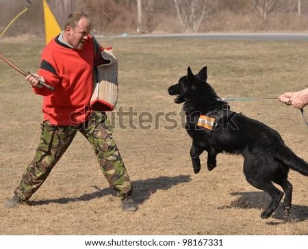 dog at a dog training center - stock photo