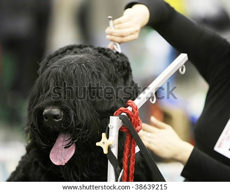 Dog at  a hairdressing saloon - stock photo