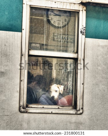 Dog at a Train Window. - stock photo