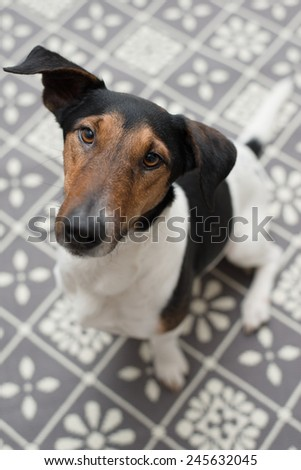 Dog at home, cute dog on carpet - stock photo