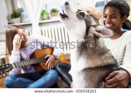 Dog at home, with his friends. Multi ethnic young girls playing with Siberian Husky, at living room - stock photo