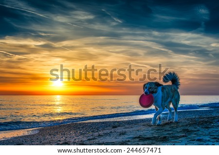 Dog at the beach during sunset