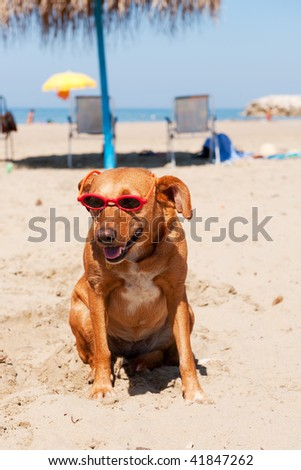 Dog at the beach for summer vacation