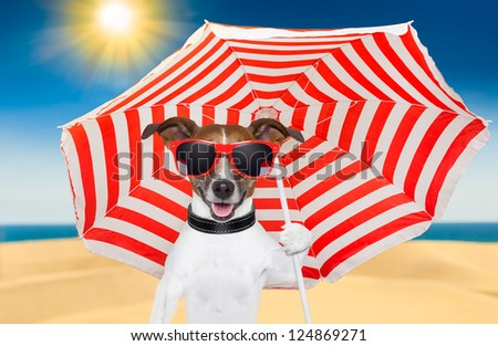 dog at the beach under red and white umbrella - stock photo