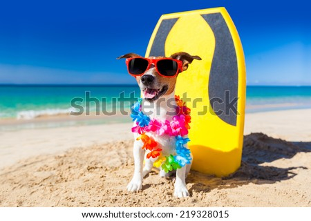 dog at the beach with a surfboard wearing sunglasses and flower chain at the ocean shore