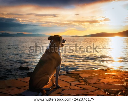 dog at the mediterranean sea, sunset  - stock photo