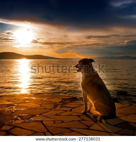dog at the mediterranean sea, sunset  - stock photo