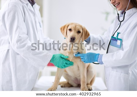 Dog at the vet clinic - stock photo