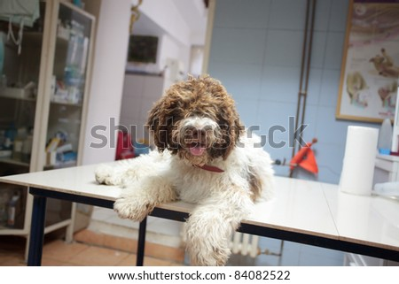dog at the vet clinic