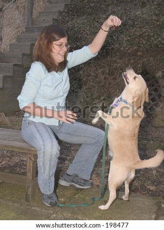 Dog begging for a treat. - stock photo