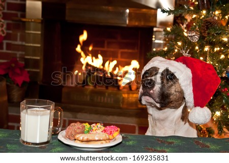 Dog begging for cookies. - stock photo