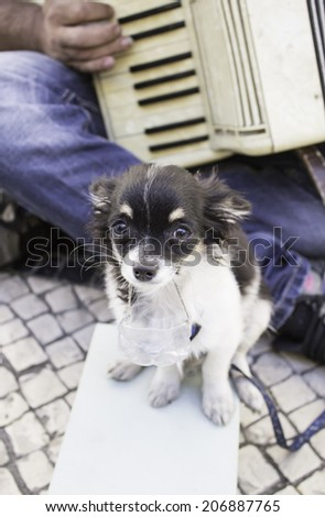 Dog begging on street with music, animals - stock photo